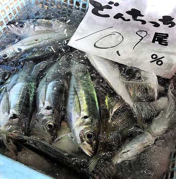 【期日限定】浜田漁港の「どんちっちあじ」ご注文できます!